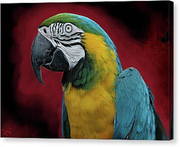 Canvas Print featuring the photograph Portrait Of A Parrot by Jeff Burgess