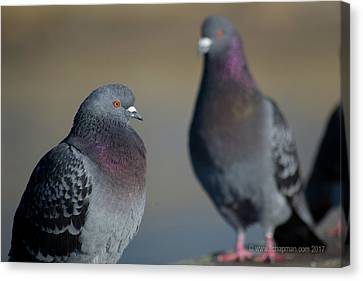 Canvas Print featuring the photograph Portrait Of A Pigeon by Lora Lee Chapman