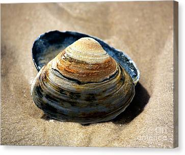 Canvas Print featuring the photograph Portrait Of A Seashell by John Rizzuto