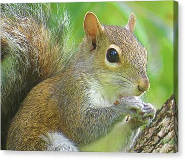 Portrait Of A Snacking Squirrel Canvas Print by Jill Nightingale