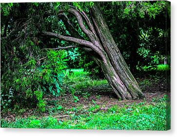 Canvas Print featuring the photograph Portrait Of A Tree by Madeline Ellis