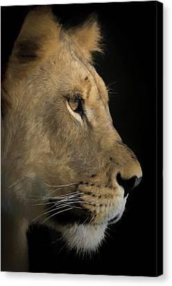 Portrait Of A Young Lion Canvas Print by Ernie Echols