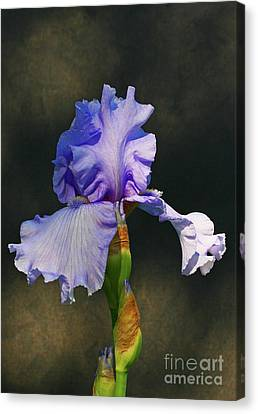 Portrait Of An Iris Canvas Print by Steve Augustin