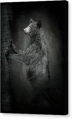 Portrait Of Black Bear Resting Against Tree Canvas Print