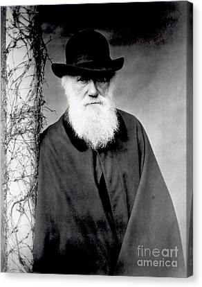 Hat Canvas Print - Portrait Of Charles Darwin by Julia Margaret Cameron