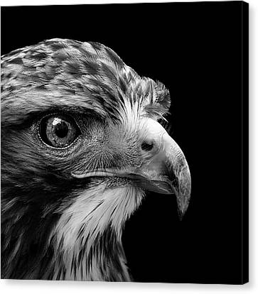 White Birds Canvas Print - Portrait Of Common Buzzard In Black And White by Lukas Holas