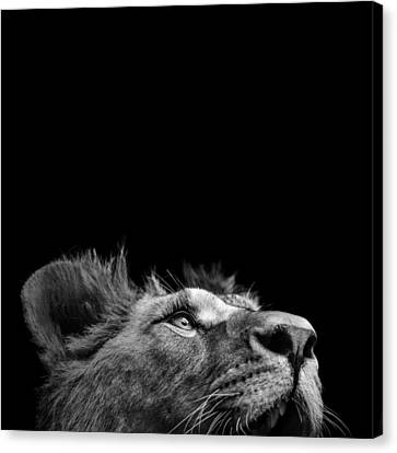 Portrait Of Lion In Black And White IIi Canvas Print by Lukas Holas