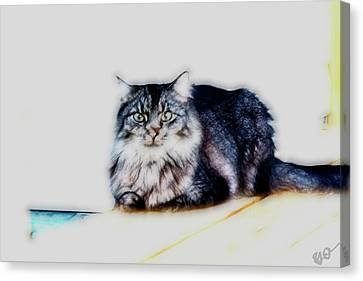Portrait Of Maine Coon, Mattie Canvas Print