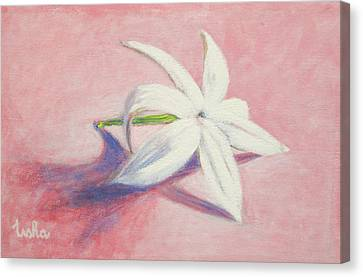 Portrait Of The Jasmine Flower Canvas Print by Usha Shantharam
