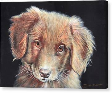 Portrait Of Toby Canvas Print
