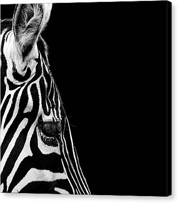 Zebra Canvas Print - Portrait Of Zebra In Black And White Iv by Lukas Holas