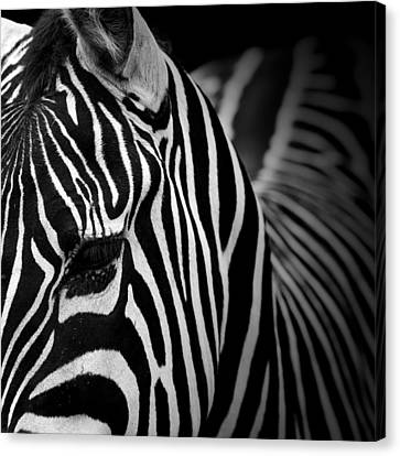 Zebra Canvas Print - Portrait Of Zebra In Black And White V by Lukas Holas