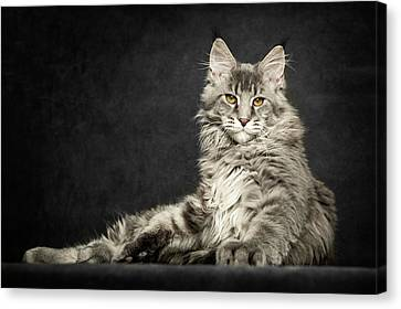 Canvas Print featuring the photograph Pose by Robert Sijka