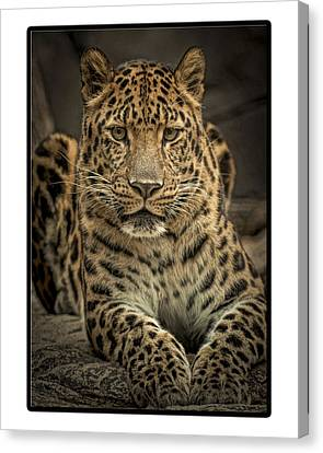 Canvas Print featuring the photograph Poser by Cheri McEachin