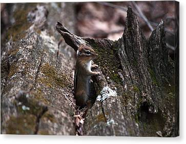 Canvas Print featuring the photograph Posing #1 by Jeff Severson