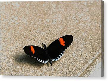 Postman Butterfly Canvas Print