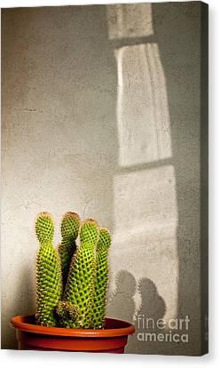 Pot Of Cactus Canvas Print by Emilio Lovisa