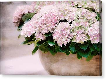Pot Of Hydrangeas Canvas Print