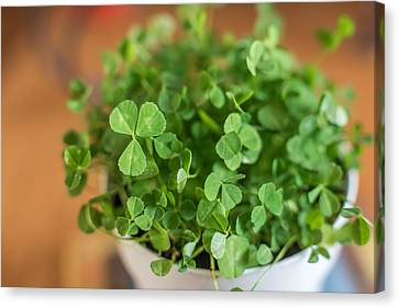Pot Of Luck Shamrocks St Patricks Day Canvas Print