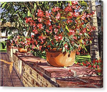 Canvas Print - Potted Begonias Santa Barbara by David Lloyd Glover