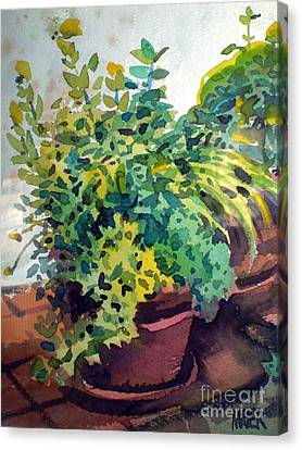 Potted Herbs Canvas Print by Donald Maier