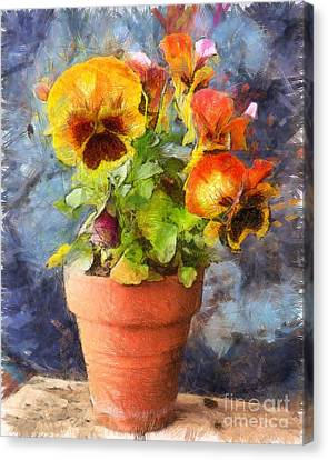 Potted Pansy Pencil Canvas Print by Edward Fielding