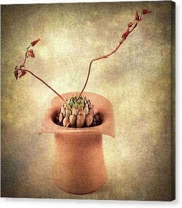 Canvas Print featuring the photograph Potted Succulent by Catherine Lau