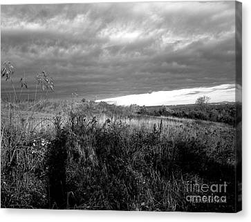 Potter Hill Meadows After Storm Canvas Print by Allison Coelho Picone