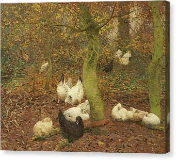 Poultry In A Wood Canvas Print