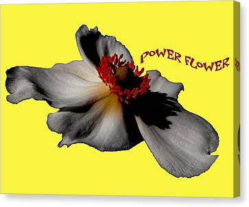 Power Flower Anemone Canvas Print