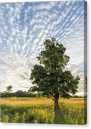 Power Of A Tree Canvas Print by Everet Regal