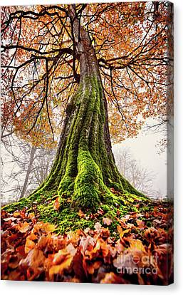 Power Of Roots Canvas Print