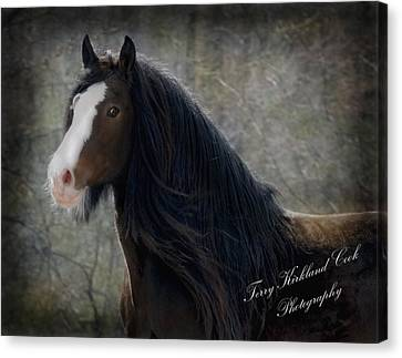 Powerful Paul Canvas Print by Terry Kirkland Cook