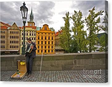 Prague Accordian Player On Charles Bridge Canvas Print by Madeline Ellis