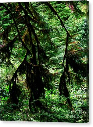 Prairie Creek Redwoods State Park 12 Canvas Print