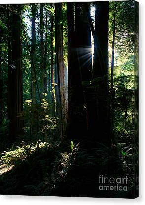 Prairie Creek Redwoods State Park 6 Canvas Print