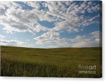 Canvas Print featuring the photograph Prairie Field by Wilko Van de Kamp