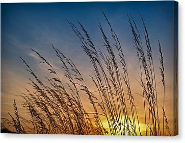 Prairie Grass Sunset Canvas Print