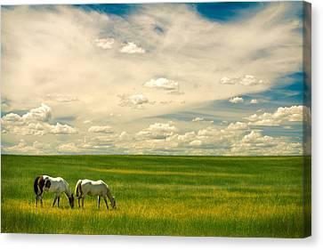 Prairie Horses Canvas Print by Todd Klassy