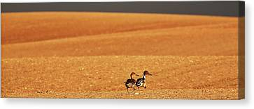 Winter Storm Canvas Print - Prairie Storm And Ducks Canada by Mark Duffy