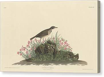 Prairie Titlark Canvas Print by Rob Dreyer