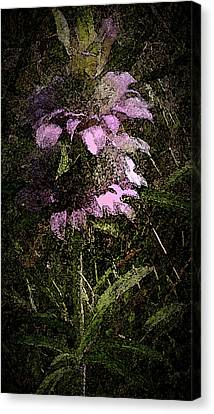 Prairie Weed Flower Canvas Print