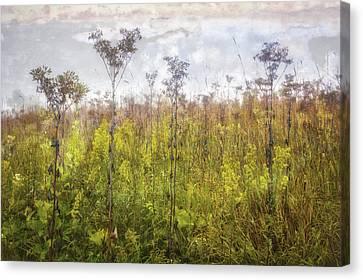 Prairie Wildflowers Of Retzer Nature Center  Canvas Print by Jennifer Rondinelli Reilly - Fine Art Photography