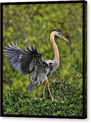 Prancing Heron Canvas Print by Shari Jardina