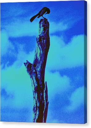 Canvas Print featuring the photograph Praying Black Bird Grace In Nature by David Mckinney