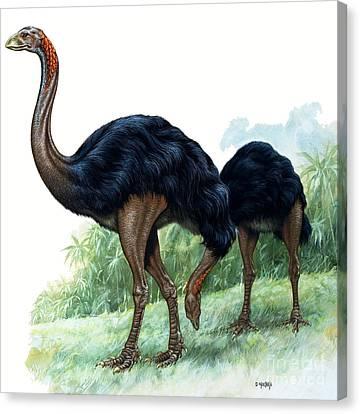 Ostrich Canvas Print - Pre-historic Birds by David Nockels