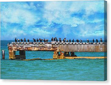 Double-crested Cormorant Canvas Print - Preaching To The Choir You Need A Vacation by Betsy Knapp