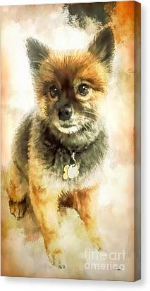 Precious Pomeranian Canvas Print by Tina LeCour
