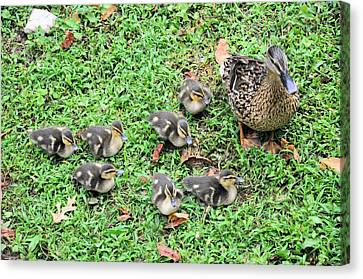 Precious Seven Canvas Print by Jan Amiss Photography