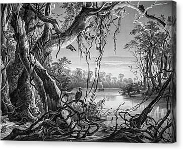Preditor In Paradise Canvas Print by Douglas Barnett